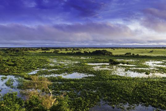 Localizado no Brasil, o Pantanal é um dos lugares mais bonitos do mundo.