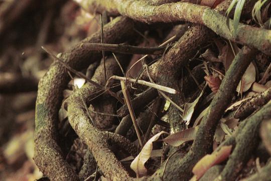 ¿Sabes que el kilo de Cordyceps ha llegado a costar 5.000 euros en el mercado de Xining?