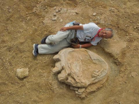 El tamaño de un fémur de dinosaurio
