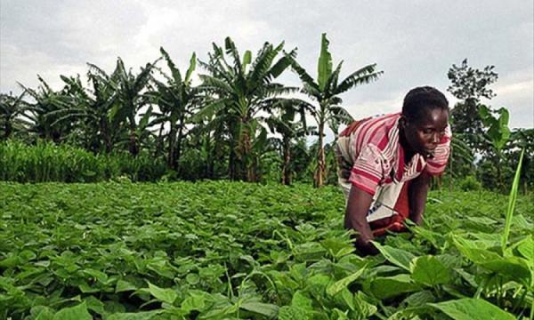Agriculture gabonaise : constats et perspectives - gaboneconomie.net