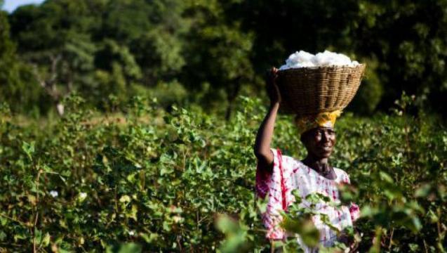 Mali: ouverture du Salon de l'agriculture consacré à la ... - rfi.fr