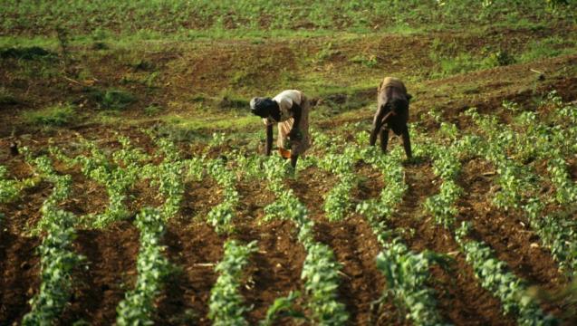 Salon international de l'agriculture du Cameroun (c) Google