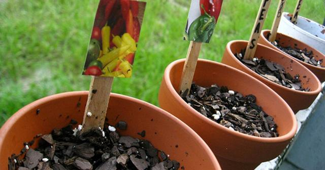 Aprenda como fazer horta em vaso