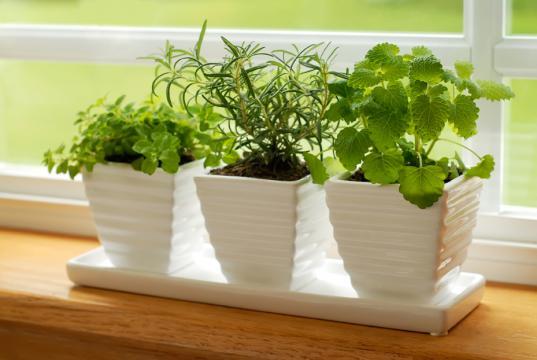Cultivar uma Horta Apartamento