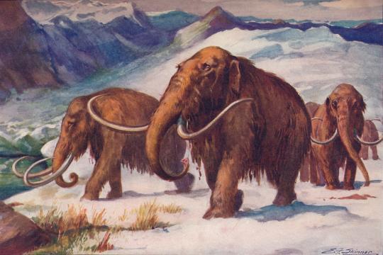 A espécie desapareceu do planeta há milhares de anos