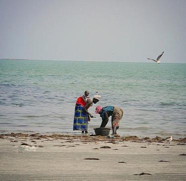 Mujeres arreglando el pescado en la orilla del mar