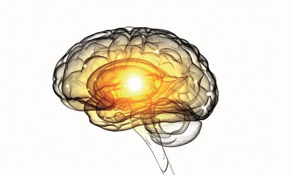 Prevención y remedios para la enfermedad de Alzheimer - Guia del ... - elalzheimer.com