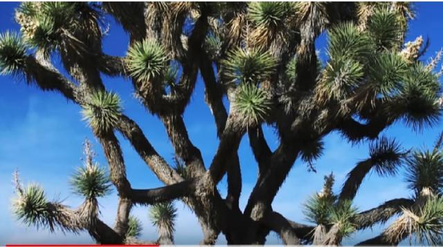 Joshua Tree National Park. [Image source/GoTraveler YouTube video]