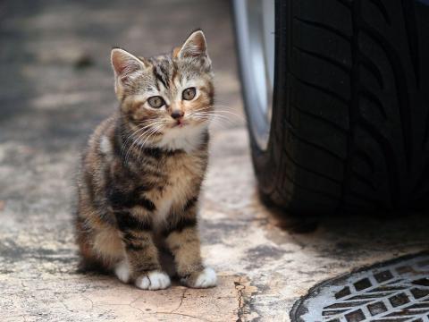 Fond d'écran : animaux, voiture, Chatons, moustaches, Pneus, Chat ... - wallhere.com