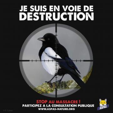 Affiche de l'ASPAS / Je suis en voie de destruction