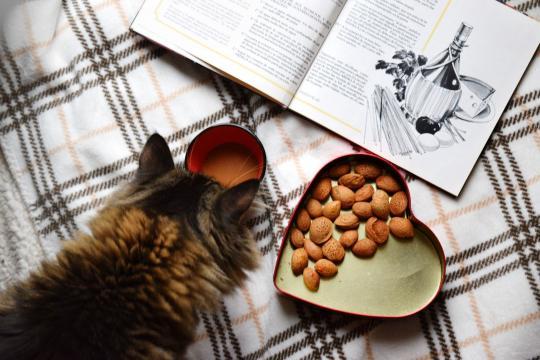Chat six aliments qu'il ne faut jamais lui donner