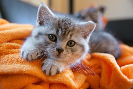 Le chat griffe des meubles : l'essentiel à savoir – Animaux - animaux-animaux.fr