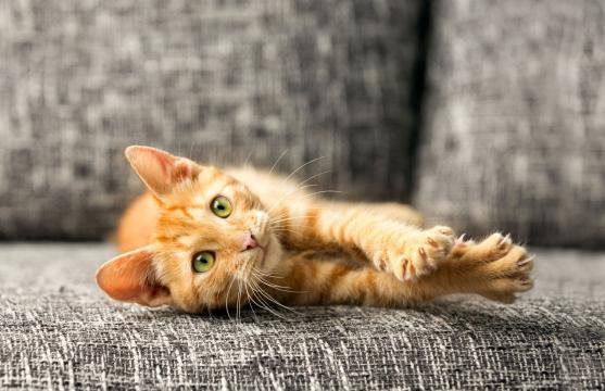 Qu'est-ce que la maladie des griffes du chat ? - Top Santé - topsante.com