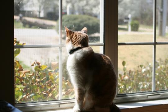 Images Gratuites : lumière, fenêtre, animal de compagnie, chat ... - pxhere.com