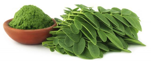 Moringa, una planta con muchas propiedades para la salud.