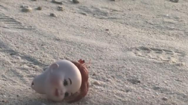 Hermit Crab stuck inside doll's head. [Image source/Viral Press YouTube video]