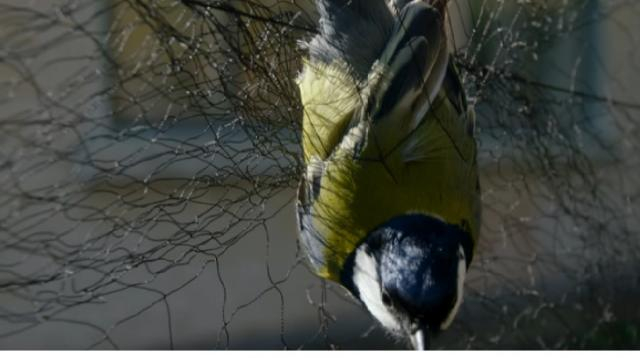 Natural selection in action   Life after Chernobyl [Image source/Animal Planet YouTube video]
