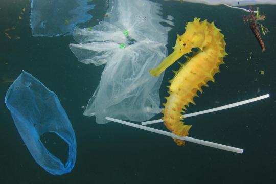 De la demonización al modelo circular del plástico ... - americaeconomia.com