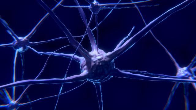 Los investigadores lograron restaurar funciones celulares y tisulares, como la citoarquitectura neuronal
