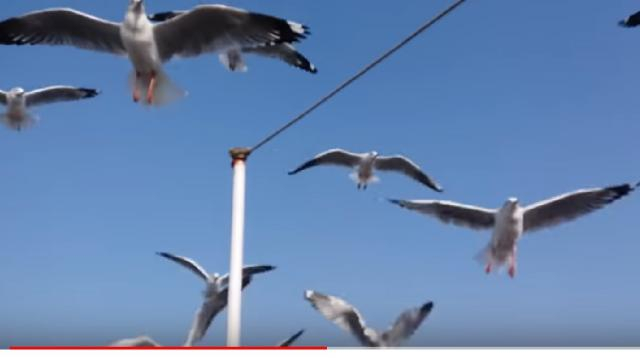 Scene when seagulls attacked people. [Image source/Creative Studio YouTube video]