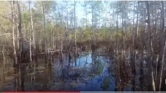 Florida Trail - 30 miles of Big Cypress. [Image source/JupiterHikes/YouTube]