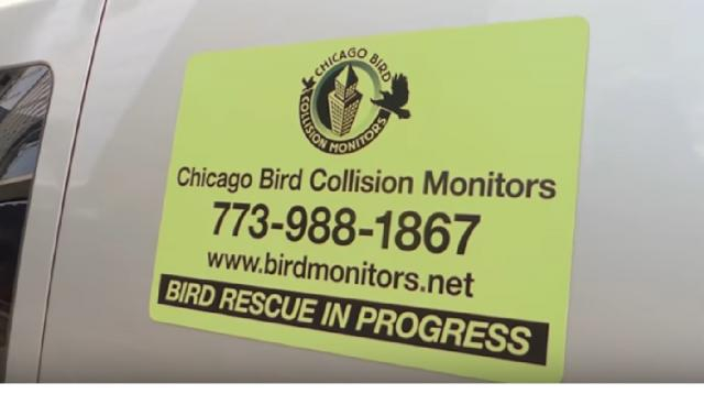Chicago Bird Collision Monitors. [Image source/1hoseeman YouTube video]