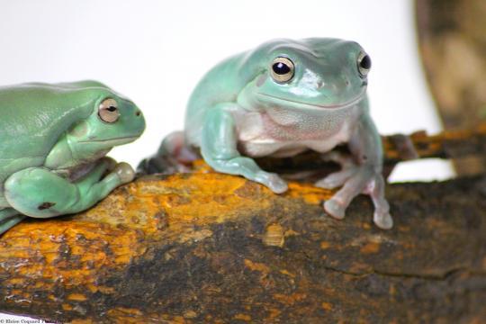 Nac : Les nouveaux animaux de compagnie – Eloïse Coquard Photographie