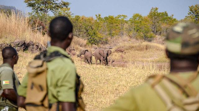 A British soldier was killed by an elephant during anti-poaching efforts. [Image Bumihillsfoundation/Wikimedia Commons]