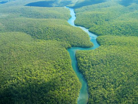 Boschi e foreste sempre più in pericolo.