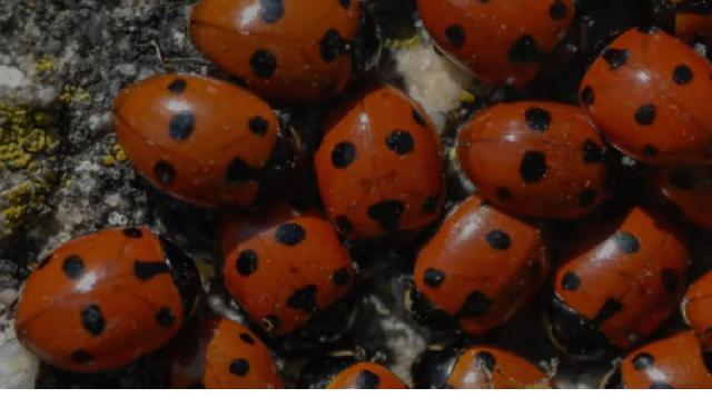 Massive ladybug swarm appears on weather radar. [Image source/Wochit News YouTube video]