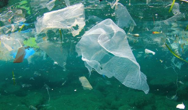 Sono sempre di più gli animali che ogni giorno muoiono per la presenza di plastica nei mari e negli oceani
