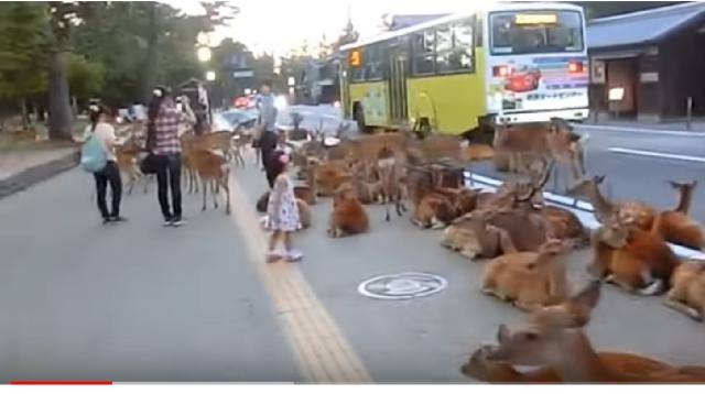 Deer Park - Nara Japan. [Image source/Wonder World YouTube video]