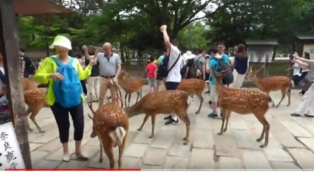 Feeding deer in Nara, Japan. [Image via Josef Beran/YouTube screencap)
