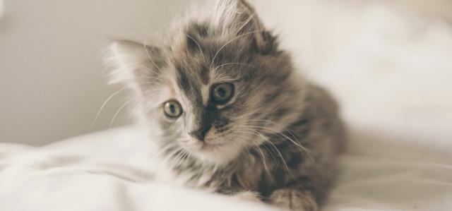 Le stress du chat - Bien-être du chat - Chats - Blog | Husse France - husse.com