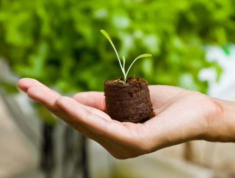 8 acciones para fomentar una educación ambiental - Inevery Crea México - ineverycrea.mx