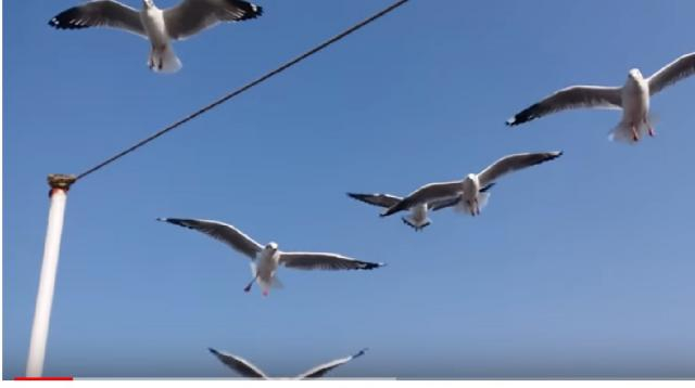 Seagulls attacked people. [Image source/Creative Studio YouTube video]
