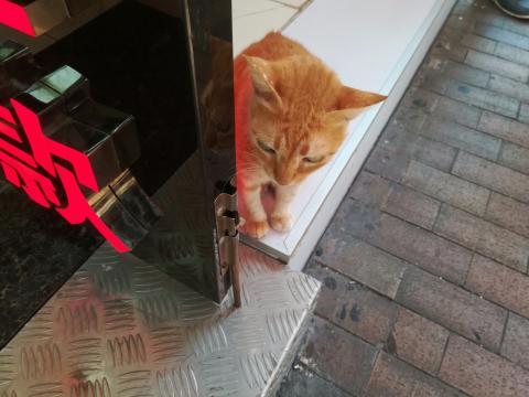 Hong-Kong : chat roux, bouddhas et chien - Le blog de MiC - canalblog.com