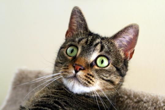 Fond d'écran : idiot, vert, chat, les yeux, tigre, trépied ... - wallhere.com