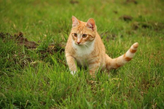 Image libre: herbe, mignon, nature, animaux, chat, félin, chaton ... - pixnio.com