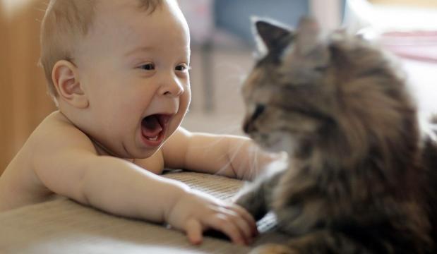 Fond d'écran : chat, Homme chauve-souris, fourrure, enfant, Vues ... - wallhere.com