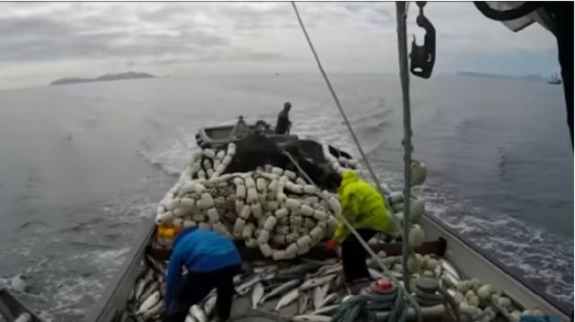 Amazing salmon fishing boat in Alaska, Big Catch Net Fishing on the Sea! [Image source/Deep Sea Fishing Life YouTube video]