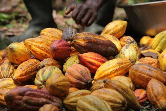 Cacao-café : Le Port autonome de Kribi s'ouvre aux acteurs du ... - journalintegration.com