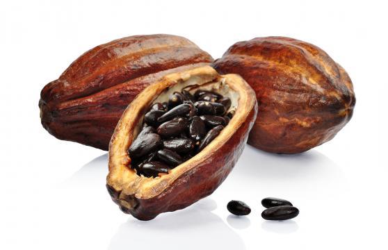 EO34 Cacao Essential Oil - rainshadowlabs.com