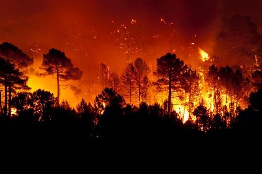 Record di incendi in Amazzonia.