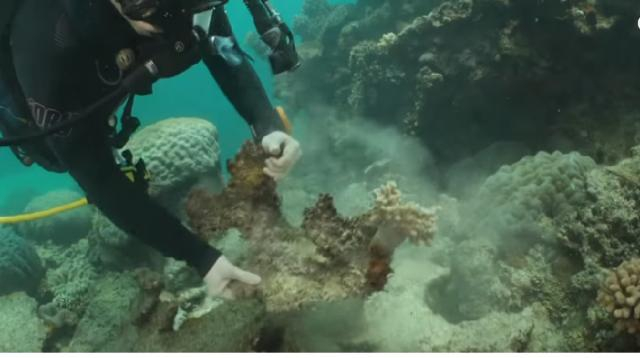 Australia's Great Barrier Reef disappearing due to climate change. [Image source/FRANCE 24 English YouTube video]