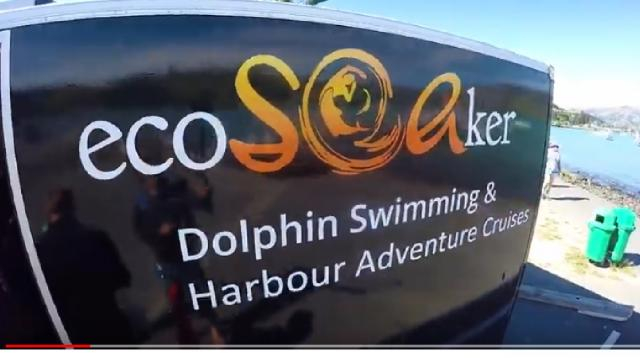 Swimming with Dolphins in Akaroa – New Zealand's Biggest Gap Year. [Image source/ BackpackerGuide.NZ YouTube video]