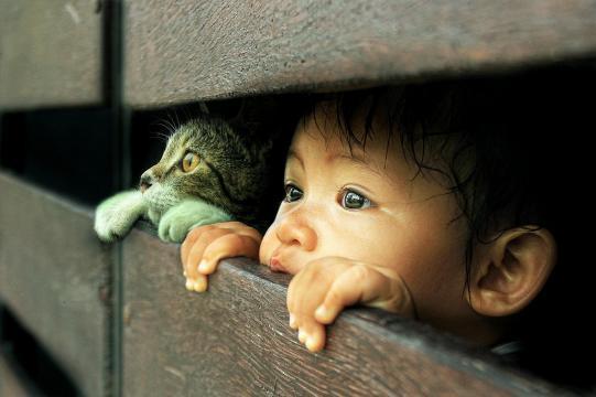 Fond d'écran : chat, Photoshop, nez, émotion, peau, petit garçon ... - wallhere.com