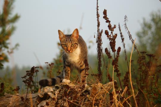 Images Gratuites : faune, chaton, l'automne, vertébré, Mieze, chat ... - pxhere.com