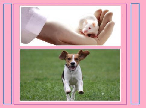 In Italia la legislazione a tutela degli animali a fini scientifici è tra le più restrittive d'Europa.