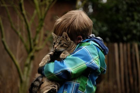 8 raisons d'avoir un chat à la maison - Photo libre de droit Pixabay